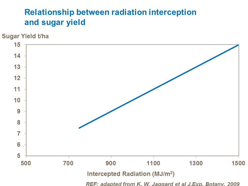 Relationship between radiation interception and sugar yield