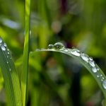 Why harvest rainwater?