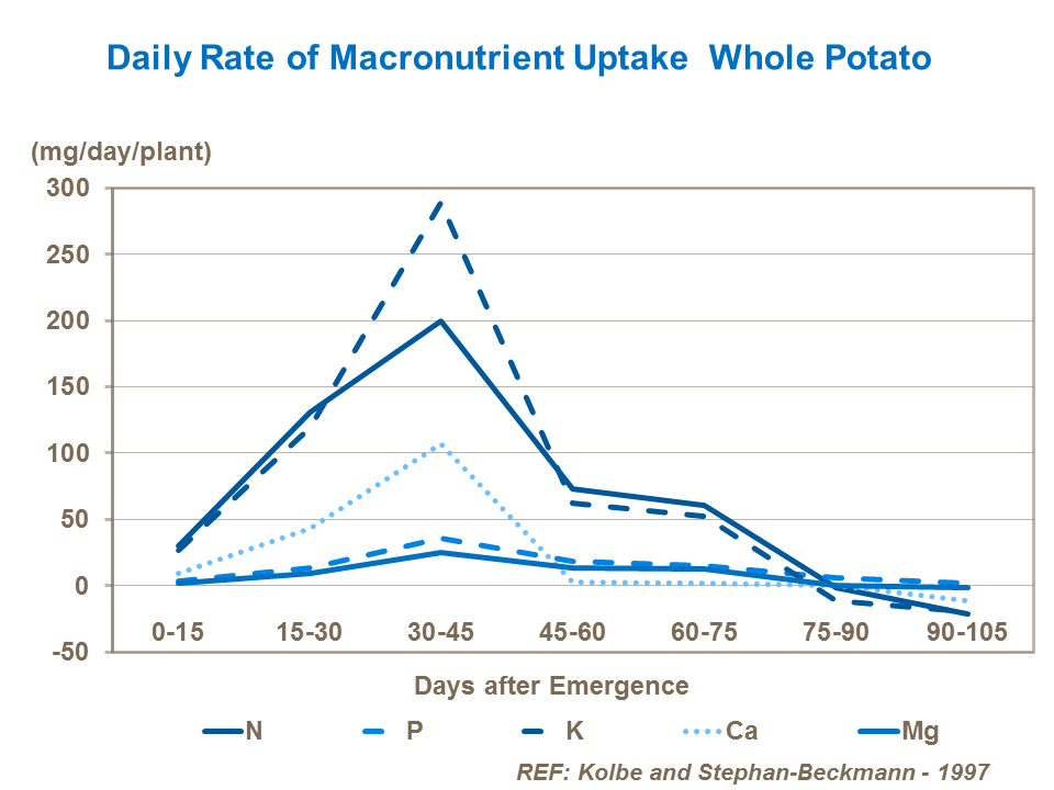 daily-rate-of-macronutrient-uptake---whole-potato
