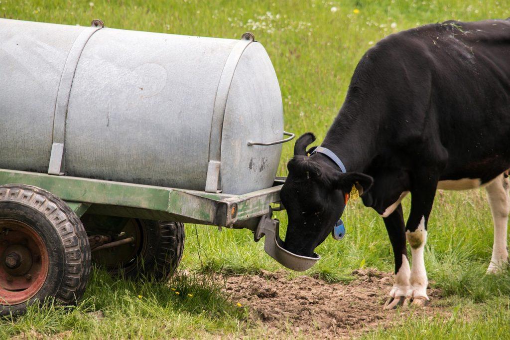 bovine-tb
